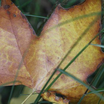 Sa, 23. November 18 Uhr: besonderer Gottesdienst zum Thema Trauer