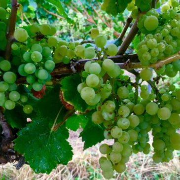 Bibel und Wein, das klingt fein – Ein biblisches Weinseminar in Feuerbach
